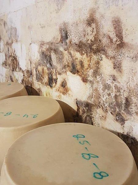 Umidita-pareti-soffitto-fidenza